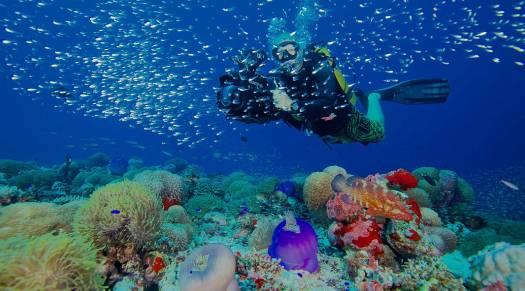 Diving at Amillafushi Maldives